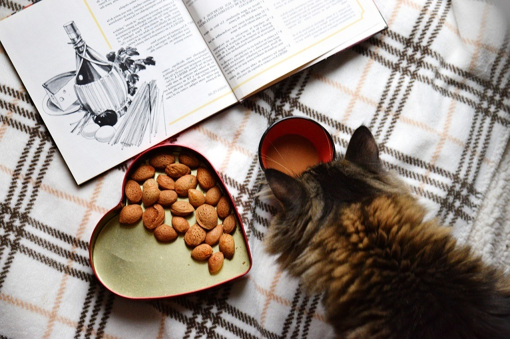 Cats Eat Almonds
