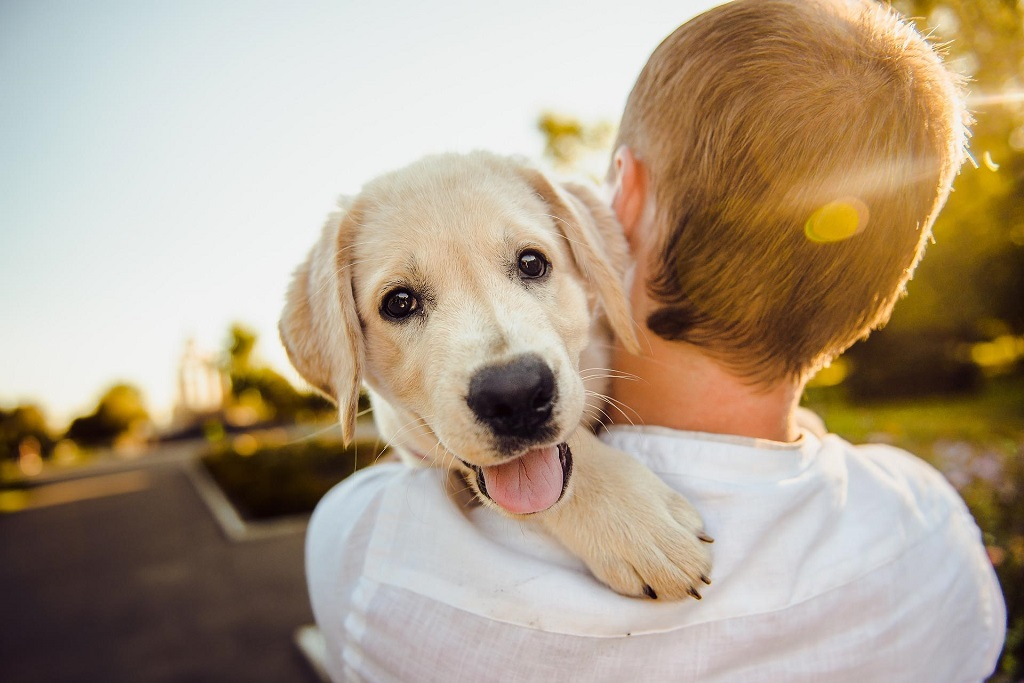 Making Your Dog Happy